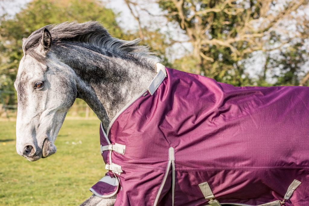Product Feature- Swish horse rugs